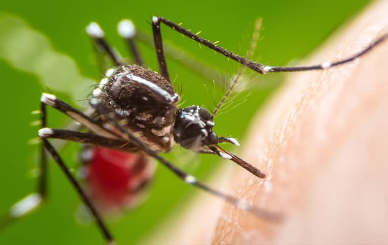 mosquito treatment in Corinth